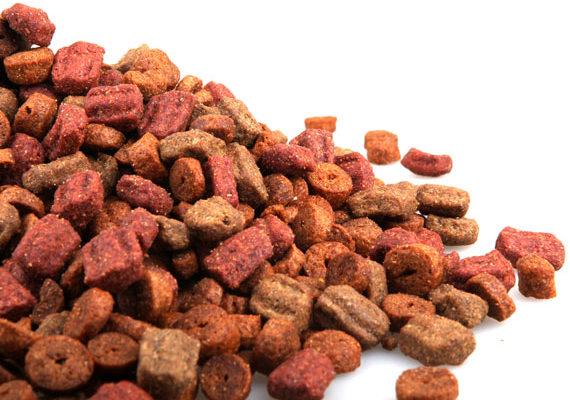 Selecting the Best Grain Free Dry Dog Food